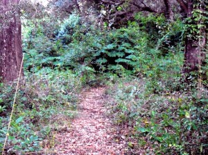 One of the paths leading into the Forest.